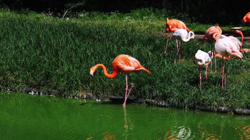 Flamingo Water Bird Green Color Pink Color Point 원색적인