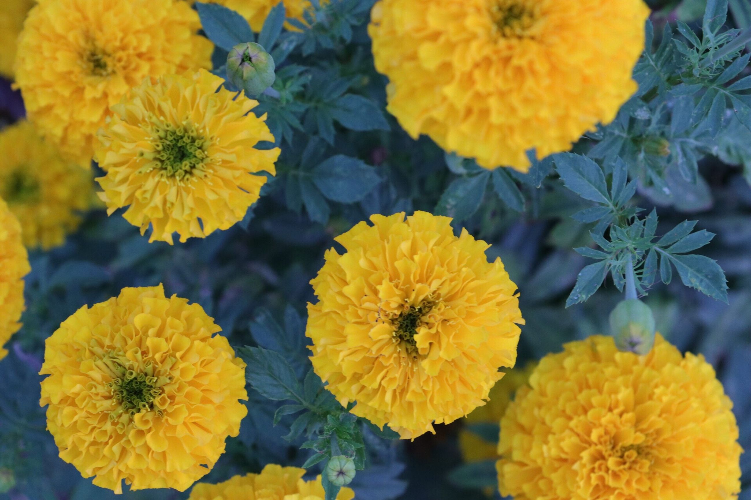 flower, yellow, fragility, beauty in nature, nature, flower head, petal, freshness, growth, blooming, outdoors, close-up, no people, day