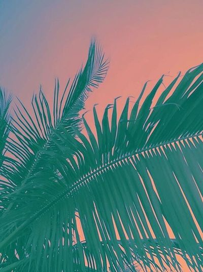 Palm Tree Pink Tropical