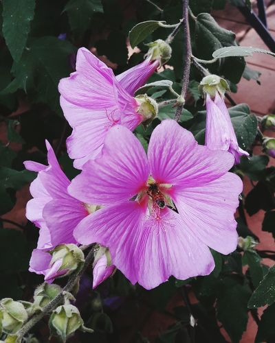 Nature Working Girl Bee Animals Flower Colors