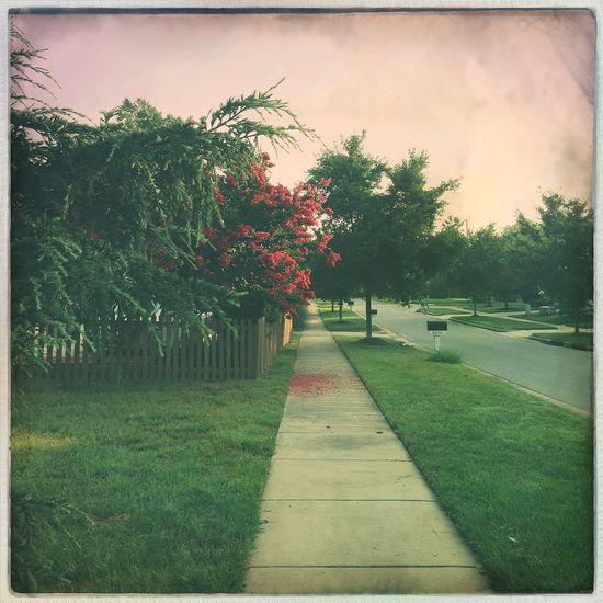 walking emilyclara Views From The Sidewalk
