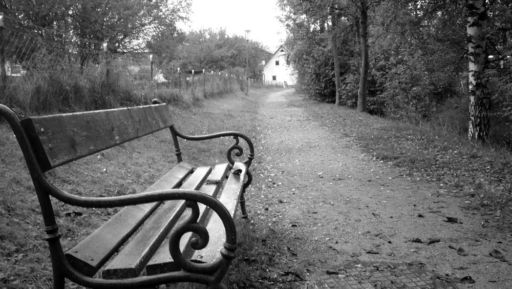 Lonely Park Bench Blackandwhite Day Empty Nature No People Outdoors Park Park - Man Made Space Tree Path Bench Empty Road Calm Pathway Seat Walkway Long The Way Forward