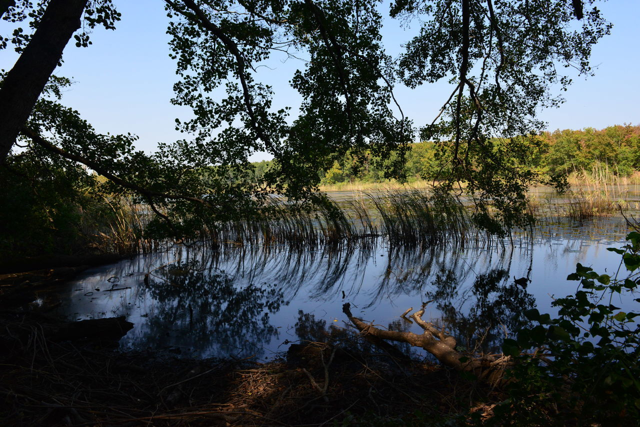 tree, water, lake, nature, tranquil scene, tranquility, growth, outdoors, day, forest, scenics, no people, reflection, beauty in nature, landscape, plant, branch, sky, grass