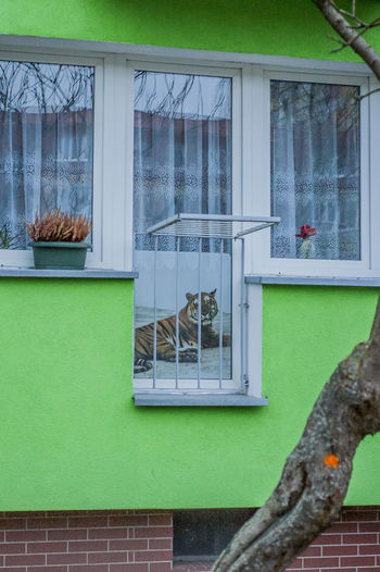 Animal Animal Themes Architecture Building Building Exterior Built Structure Day Glass Glass - Material Green Color House Nature No People Outdoors Plant Reflection Residential District Transparent Vertebrate Wall Window Window Frame The Art Of Street Photography