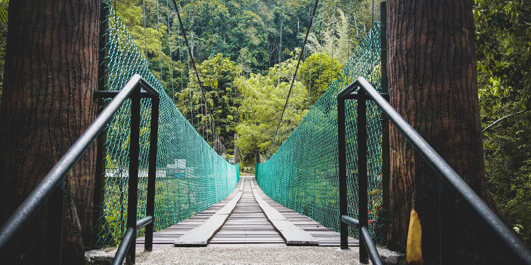 View of bridge in forest