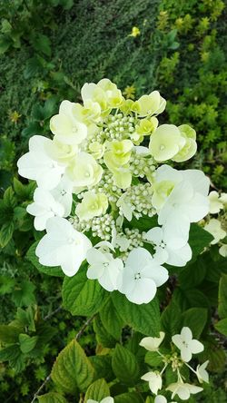 Flower Nature Beauty In Nature Plant Petal Green Color Flower Head