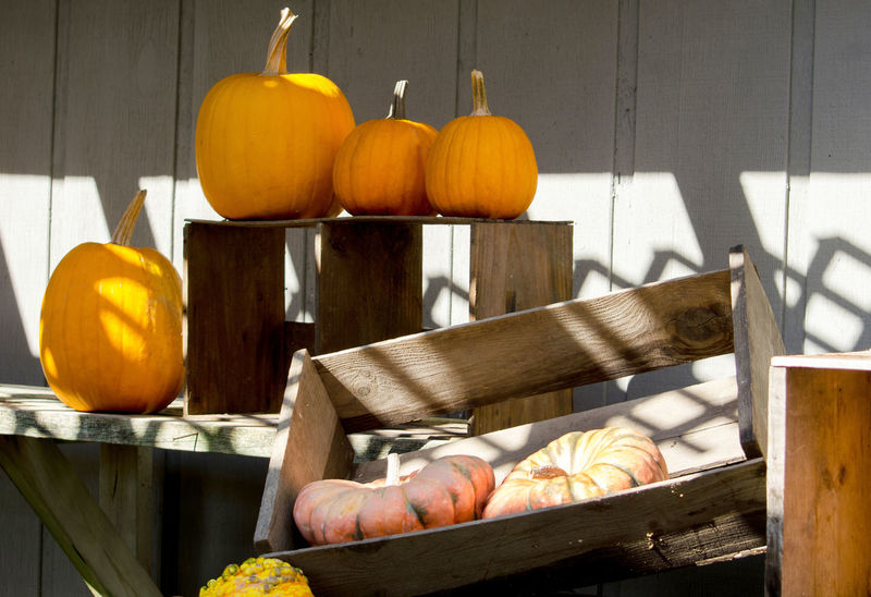 orange pumpkins sit in wood boxes in a rustic potting shed Autumn Fall Beauty Fall Colors Halloween Michigan Pumpkins Rustic Thanksgiving USA Vegetables & Fruits Wood Boxes Day Decorations Decorative Food Freshness Gourds Orange Color Potting Shed Seasonal