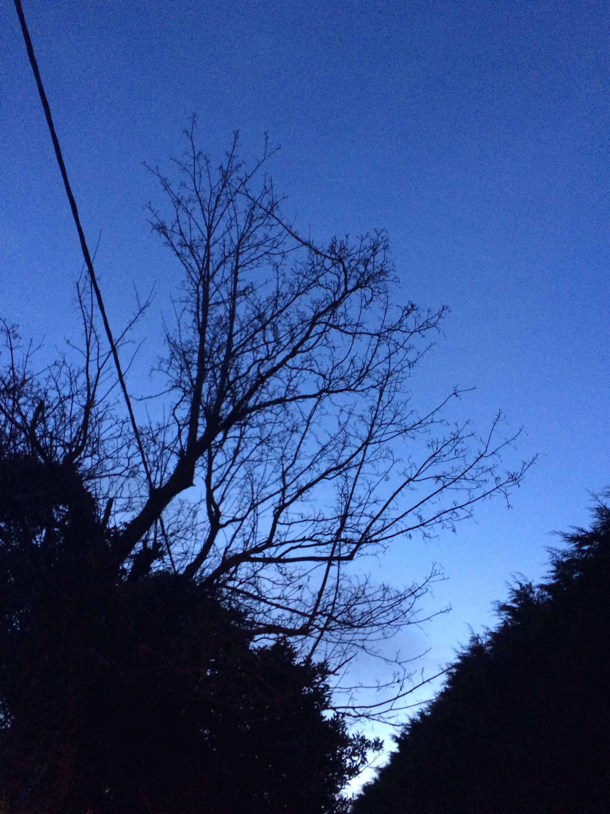 low angle view, tree, blue, bare tree, silhouette, branch, clear sky, tranquility, nature, beauty in nature, sky, scenics, tranquil scene, growth, outdoors, dusk, no people, copy space, tree trunk, high section
