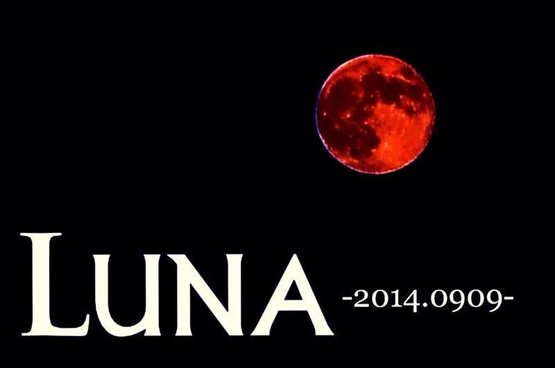 Super moon.2014、登りきる前は赤かった〜 Super Moon 2014 Super Moon Moon Japan