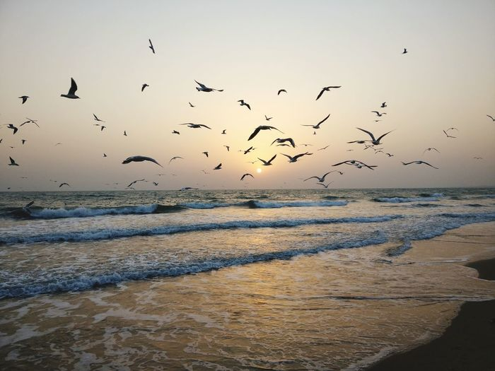 flock of seagulls :) Flying Bird Flock Of Birds Animal Wildlife Sunset Beauty In Nature Silhouette Beach Sky Outdoors Nature Sea EyeEmNewHere