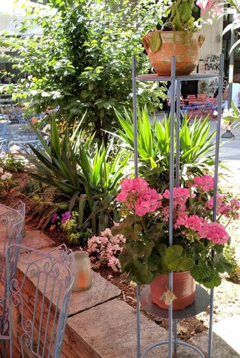 Potted plants on table at yard