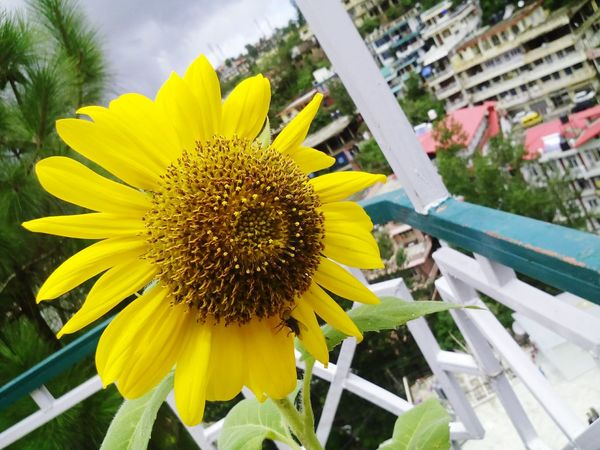 Sunflowers🌻 Beautiful Flowers