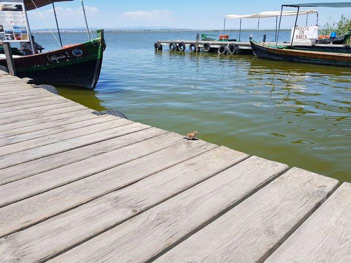 Barco ambulante. Water Nautical Vessel Day No People Nature Animal Themes Bird