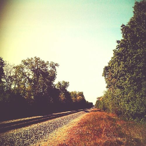 Nature Train Tracks Taking Photos Hello World