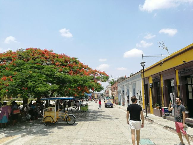 Tourist Tourism Travel Destinations Travel Oaxaca Colonial Oaxaca México  Trip Outdoors Colors Colorful Day Street