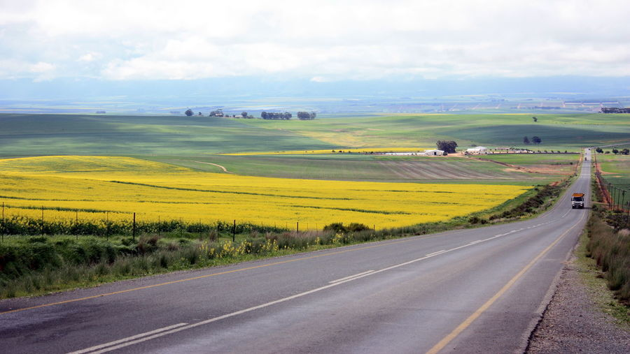 Agriculture Beauty In Nature Canola Fields Forever Day Field Grass Landscape Nature No People Outdoors Road Rural Scene Scenics Sky South Africa Swartland The Way Forward Tranquil Scene Transportation Tree