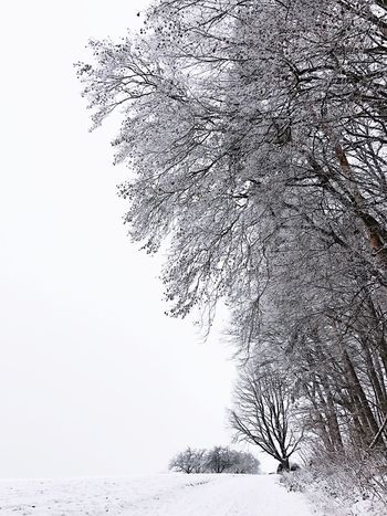 Winterwonderland Snow Winter Cold Temperature Tree Nature Weather Beauty In Nature Branch Frozen Tranquility Snowing Outdoors No People Scenics Tranquil Scene Day Bare Tree Landscape Sky