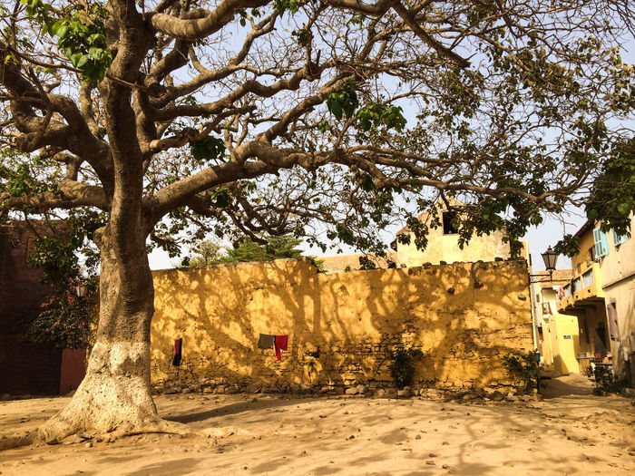 Africa Africa Collection Architecture Baobab Baobab Tree Building Exterior Built Structure City Dakar Day Goree Island Goreeisland2016 Gorée Nature Outdoors People Senegal Sky Tree