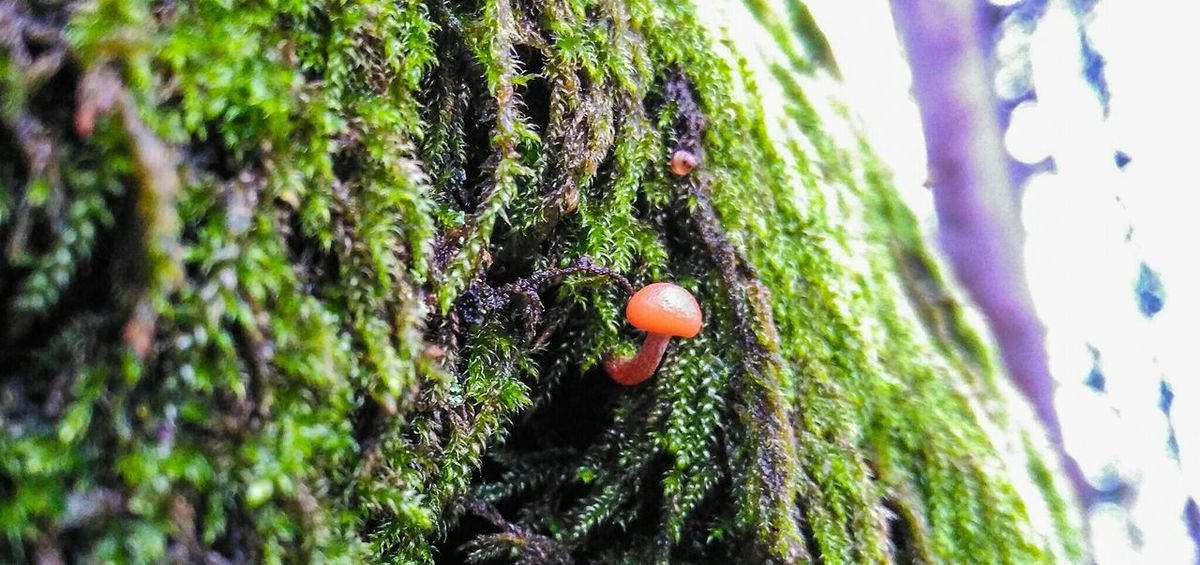 Alone in the tree Autum In Porto Autumn EyeEm Nature Lover Fungi Tree Fungus Fungus 🍄 Macro Macro Photography Macro_collection EyeEm Best Shots - Macro / Up Close Red On The Edge EyeEm Portugal Tree Trunk Trees Treescollection Picturing Individuality Red RePicture Growth Macro Beauty Focus On Macro Beauty