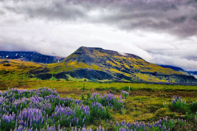 Iceland Vista Volcanic Landscape Beauty In Nature Cloud - Sky Plant Mountain Scenics - Nature Tranquil Scene Sky Tranquility Environment Landscape Growth No People Flowering Plant Flower Nature Day Idyllic Land Green Color Mountain Range