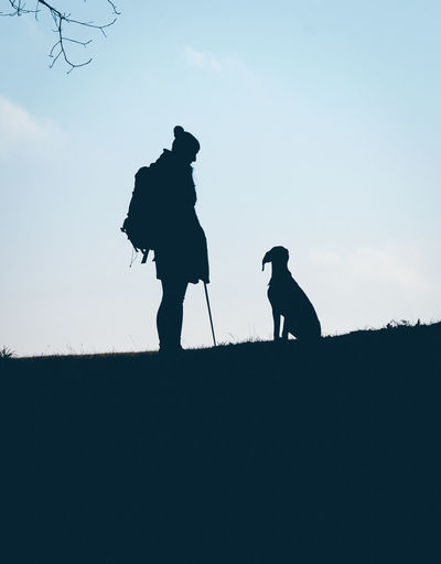 Silhouette of dog on ground