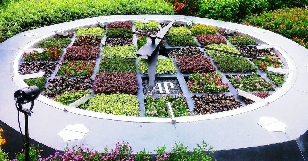 Clock Garden Flowers Colors Garden Photography Flowerporn High Angle View Day Outdoors Plant No People Nature Growth Close-up Grass Flower Freshness