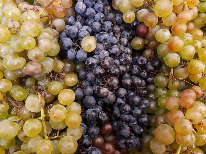 wine grapes at