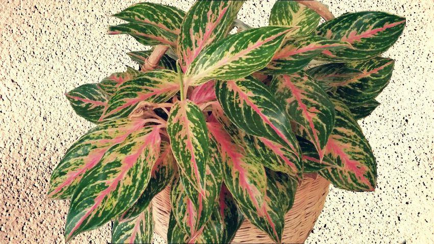 Plants Growth Single Object St.Croix, US Virgin Islands