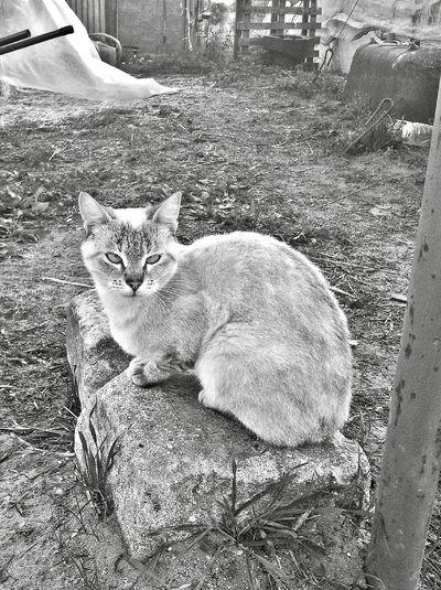 Cat Cat Cat Watching Gatto Animal Portrait