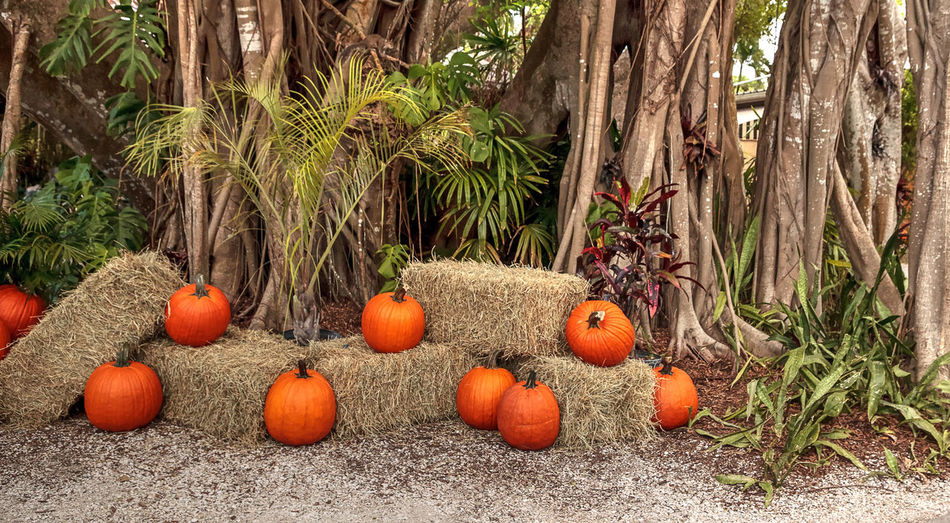 View of pumpkins on hay stack against trees