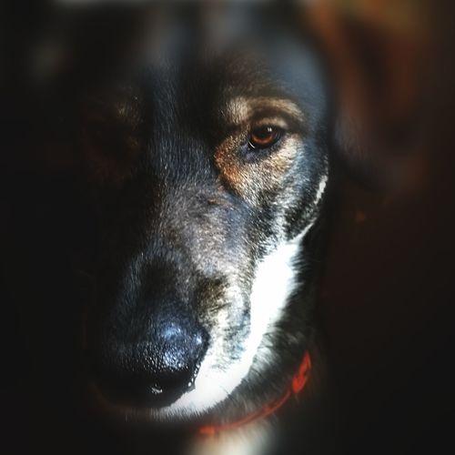 Mon Titou De Cros Pets Portrait Dog Looking At Camera Close-up