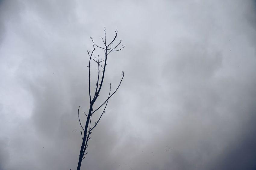 Celebrating Darker Days 🌓🌚 Drought Dramatic Sky Bare Tree Nature Branch Tree Cloudy Clouds Oblivion Sécheresse MnM MnMl Mnmlsm Minimalism Minimal Minimalistic Minimalmood Minimalist Minimalobsession Minimalart Minimalarchy Decay Decomposing Decomposition