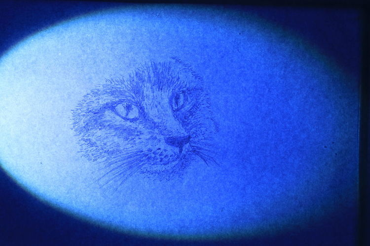 The face of cat wrote by pencil on white paper in blue light Diamond Eyes  Rat Textures Animal Animal Themes Black And White Blue Cat Close-up Cute Day Domestic Cat Fur Indoors  Long Mustache Long Tail Looking At Camera Mammal No People One Animal Pencil Drawing Portrait Small Tiger Texture Vignette