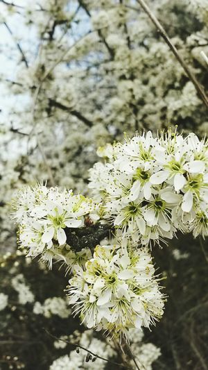 Spring Sunshine Nature_collection Blossom Flowers April Stunning_shots Bee Bees And Flowers Warmthandsunshine