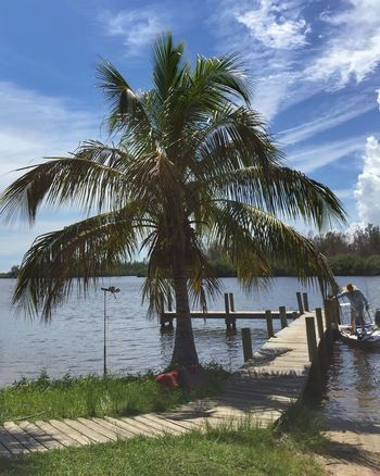 Dock in a bay Honest John's Fish Camp Dock Boat Dock Boat Docking Palm Tree Tranquil Scene Palm Tree Summer Shoreline Small Boat