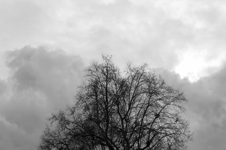EyeEm Best Shots EyeEm EyeEm Best Pics Eye4photography  Close-up Bnw Blackandwhite Black And White Black & White Blackandwhite Photography Monochrome Tree Sky Cloud - Sky Low Angle View Bare Tree Nature Branch Silhouette Beauty In Nature Outdoors Treetop Tranquility Cloudy