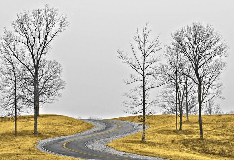 Bare trees on road against clear sky during winter