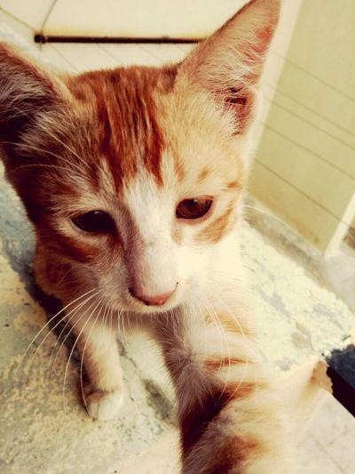 Selfie Kitten Gingercat Whiskers Eyeemphotography Mylittlefriend Cutelittething