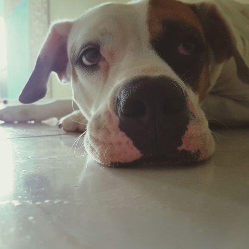 One Animal Animal Themes Pets Dog Domestic Animals Animal Head  Animal Loyalty Looking At Camera