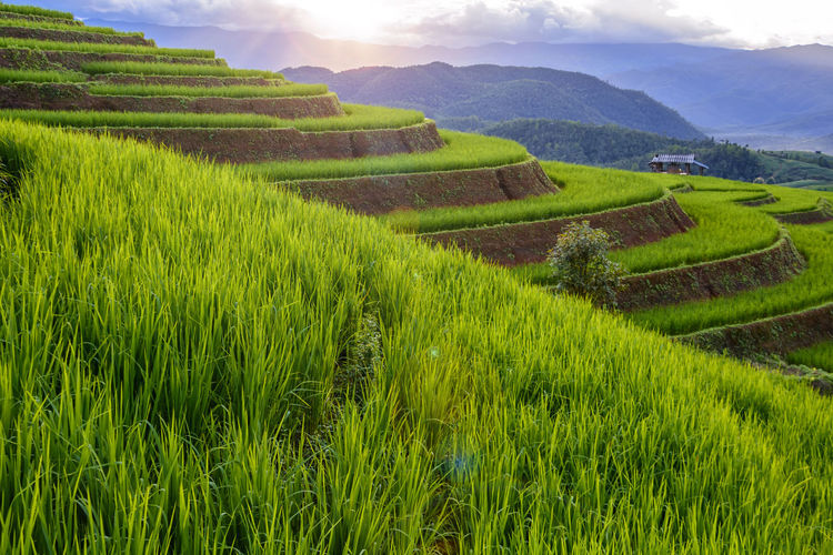 Chiang Mai | Thailand Chiangmai Agriculture Beauty In Nature Crop  Day Environment Farm Field Green Color Growth Land Landscape Mountain Nature No People Outdoors Plant Plantation Rural Scene Scenics - Nature Sky Tranquil Scene Tranquility