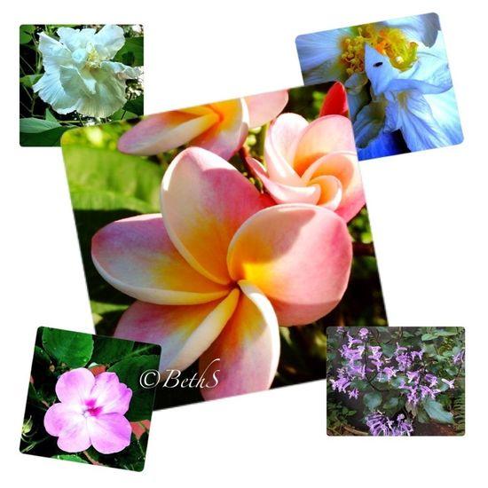 flower collage...