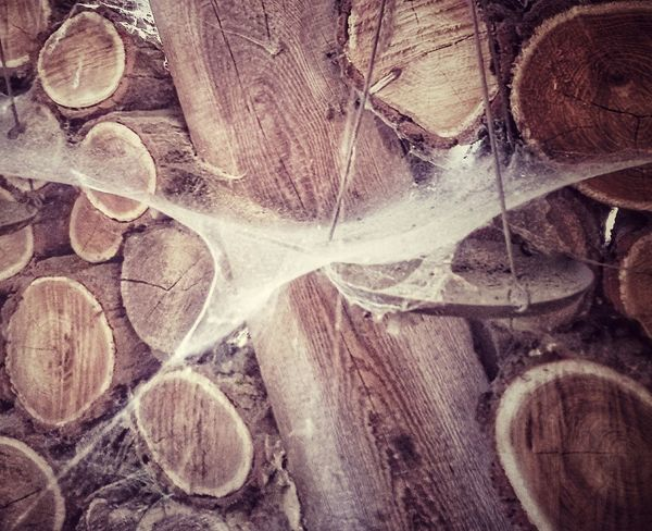 Wood - Material Wood Spider Web Spuky Nostalgic  Old Buildings Farm Life Farm House Woodpile Wooden Structure Forest Industry Engineering Old Stuff EyeEm Best Shots EyeEm Nature Lover Calm Lonleyness Tristesse Tranquility