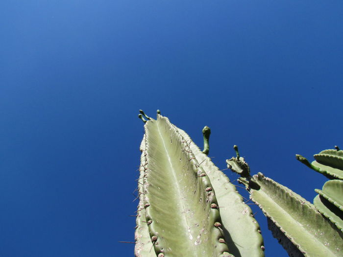 Low angle view of birds perching on blue sky