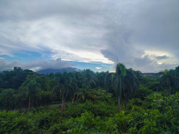 Forest Nature Tree Growth Landscape Sky Cloud - Sky Outdoors Beauty In Nature Lush - Description Mountain Rainforest Rainy Days Rain Puerto Rico Jungle Puertorico Vacation Travel Traveling Travel Photography Dramatic Sky Forest Social Issues The Great Outdoors - 2017 EyeEm Awards