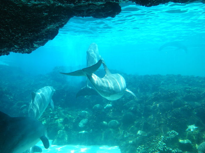 Dolphins Animal