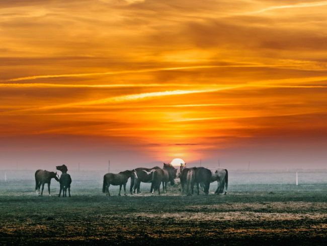 Fog Foggy Mist Beauty In Nature Cold Temperature Landscape Winter Clear Sky Orange Color Beauty In Nature Nature Horse Photography