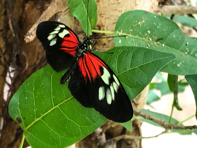 Animal Themes Animal Wildlife Animals In The Wild Beauty In Nature Butterflies For Africa Butterfly - Insect Close-up Day Fragility Freshness Green Color Insect Leaf Nature No People One Animal Outdoors Plant Red Color