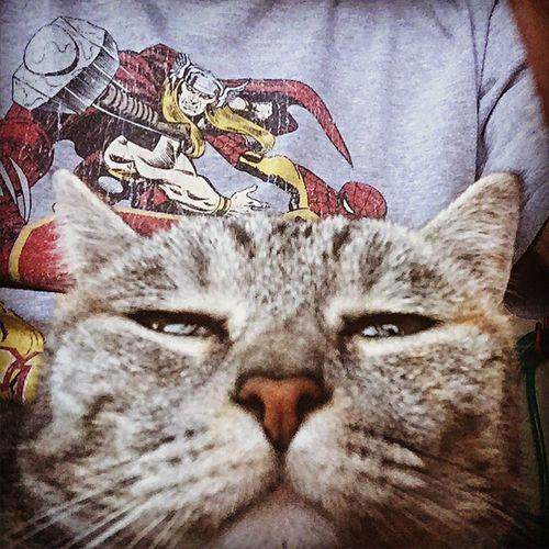 Faccia Da Pirla My Cat I Love My Cat Tshirt of Marvel / Trojans Cheeky Face Adorable Perugia