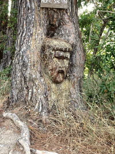 Sculpture Tree Nature Sculpture Face Face In The Tree No People Beauty In Nature
