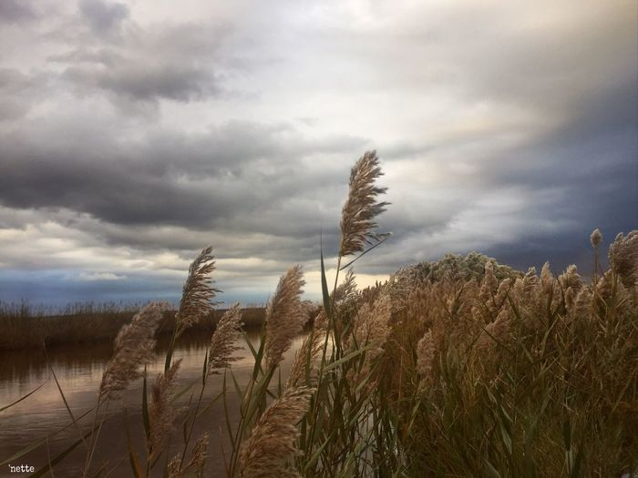 Stormy Sky Beauty In Nature Against The Sky Blackwater National Wildlife Refuge
